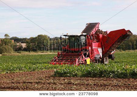 Harvesting In Norfolk