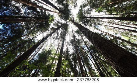 Variety Crowns Of The Trees In The Spring Forest Against The Blue Sky With The Sun. Bottom View Of T