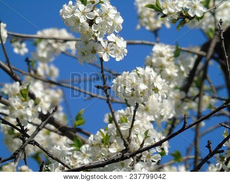 Beautiful Caption Of Some Flowers From The Village In Spring