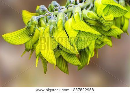 The very unusual and stunning Bird flower