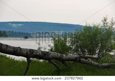 Fallen Tree On The River Bank. Misty Morning In Siberia, Russia