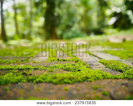 Beautiful Green Moss On The Red Brick Floor, Moss Closeup, Macro.  Beautiful Background Of Moss For