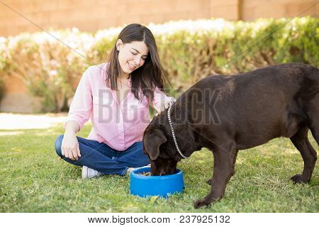 Handsome Chocolate Labrador Eating Pedigree Dog Food While Owner Woman Looking And Stroking Him In H