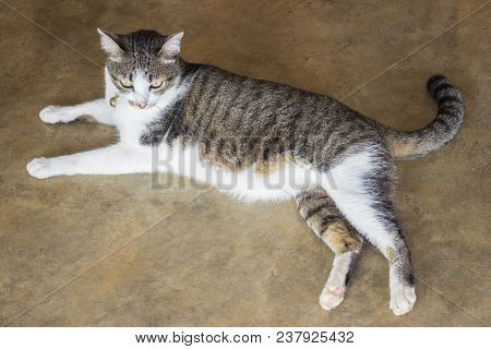 Cute Cat Relaxing On The Floor, Stock Photo