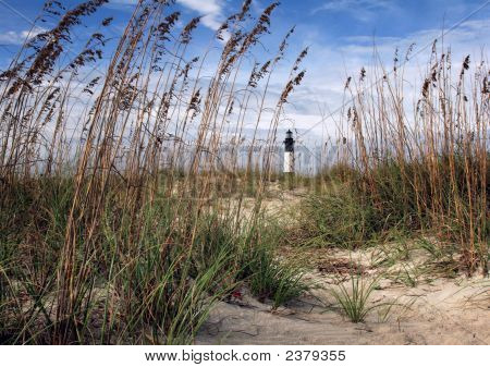 Sea oats line the path through the beach sands of Tybee Island poster