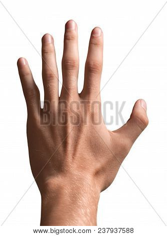 Hand Five Fingers Human Fingers Raise Hand Number Five Open Hand Five