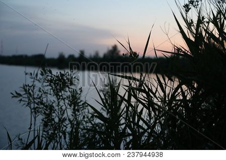 Wilderness Sunset, Lake. The Sun Sits Down On The Lake. Quietly Quietly Rest. Around Grass And Trees