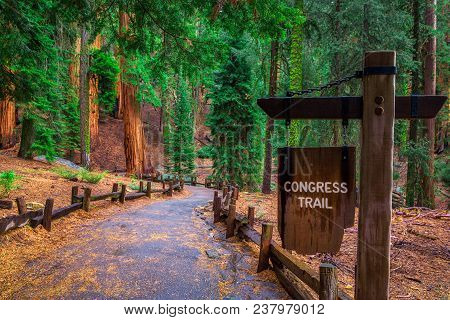 Congress Trail Sign In The Giant Forest Of Sequoia National Park, California. Hiking And Active Life