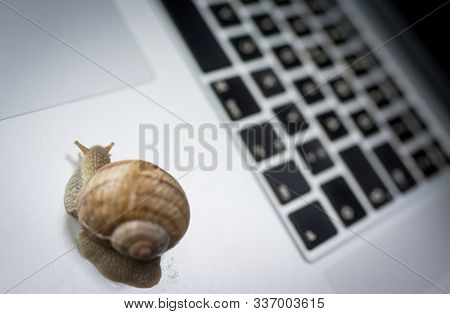 Slowly moving snail means slow internet