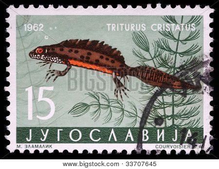YUGOSLAVIA - CIRCA 1962: A stamp printed in Yugoslavia shows the Triturus with the inscription