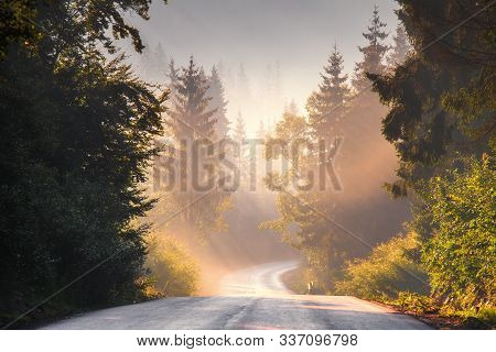 Road In Scenic Forest With Mist And Sunlight. Bright Sun Rays Illuminate Road Through Tall Pine Tree