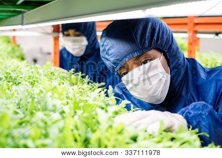 Female researcher in protective workwear standing by shelf with green seedlings of new sorts of horticultural plants poster