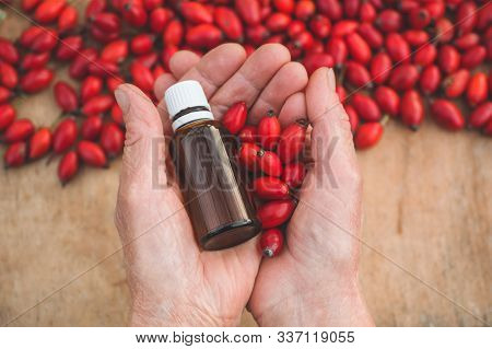Rose-hips And Rose Hip Seed Oil In Grandmothers Hands. Rosehip Or Rose Hip, Commonly Known As Rose H