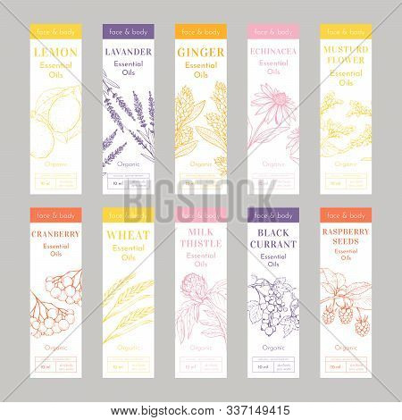 Cosmetic Essencial Oils Vertical Tags. Vector Print Template Set Of Flyers Or Banners. Lavender, Ech