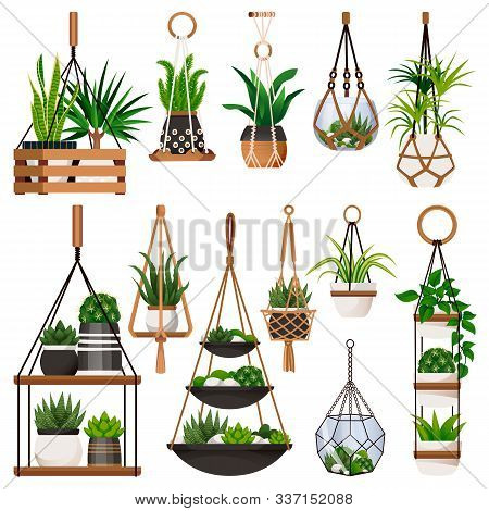 House Plants In Hanging Macrame Pots, Isolated On White Background. Vector Flat Cartoon Illustration
