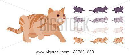 White, Black, Orange, Grey Striped Pedigree Cat Sneaking Set. Active Healthy Kitten With Beautiful F