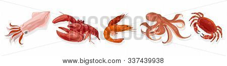 Vector Set With Cooked Marine Animals, Products Squid, Lobster, Shrimp, Octopus, Crab. Boiled Or Ste