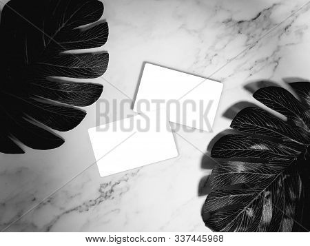 business card mock-up. white blank business cards on white marble background with tropical palm leaves. template, monotone color
