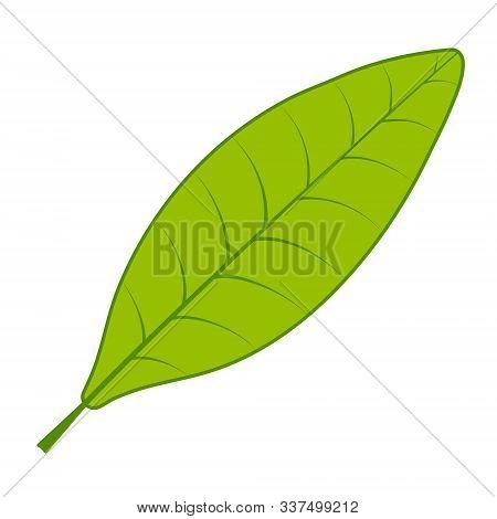 Tea Green Leaf Vector Tea Tree Leaf On White Background