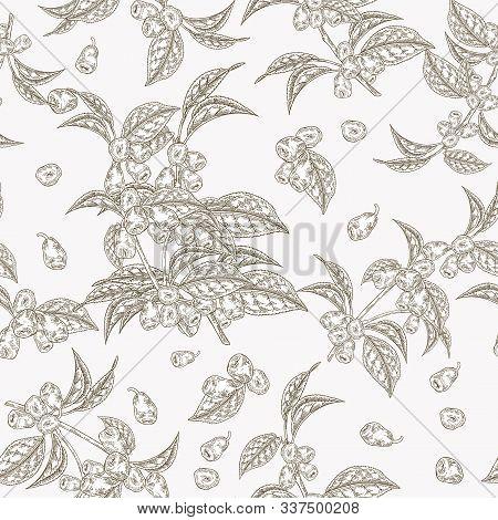 Honeysuckle Leaves And Berries Seamless Pattern. Lonicera Japonica. Vector Illustration. Design For