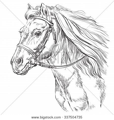 Horse Portrait With Bridle. Horse Head With Long Mane In Profile In Black Color Isolated On White Ba