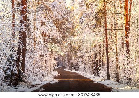 Beautiful Winter Sunrise In White Snowy Forest With Rural Road. Tranquil Sunny Winter Background.