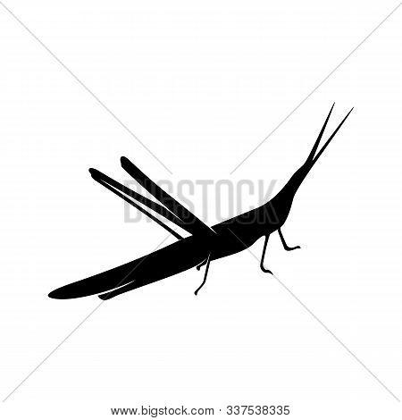 Grasshopper Logo Design Vector Illustration. Grasshopper Design Template