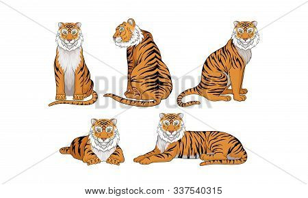 Collection Of Tigers, Predatory Wild Animal In Various Poses Vector Illustration