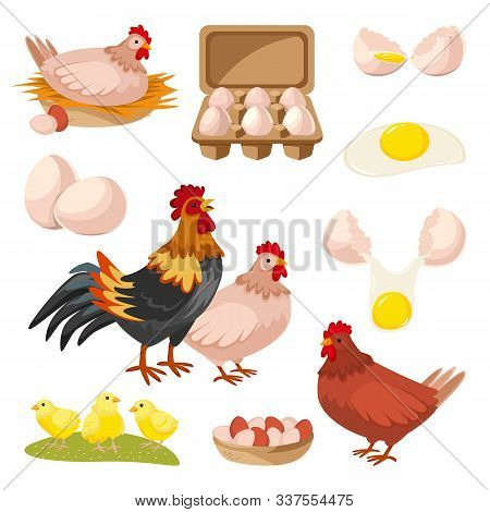 Poultry Farm And Fresh Eggs Icons. Hen, Rooster And Little Chicken Design Elements, Isolated On Whit
