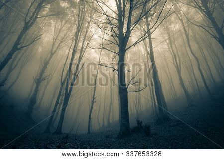 Panoramic View Of The Foggy Autumn Forest In The Mountains