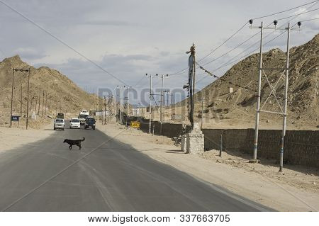 Leh, Jammu And Kashmir, India - July 25, 2011: Dog Crossing The Freeway On The Outskirts Of Leh, For