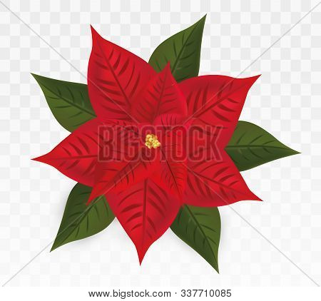 3d Realistic Poinsettia Isolated On Transparent Background.red Christmas Star. Vector Icon. Poinsett
