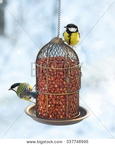 Two Great Tits Eat Food From A Hanging Feeder On A Snowy Winter Day.