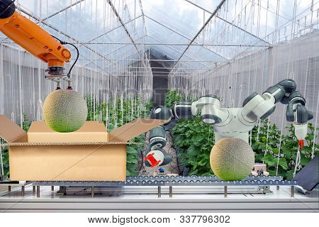 Industrial Robot That Were Apply For Agricultural To Work Packing The Melon Put On Cardboard Box Via