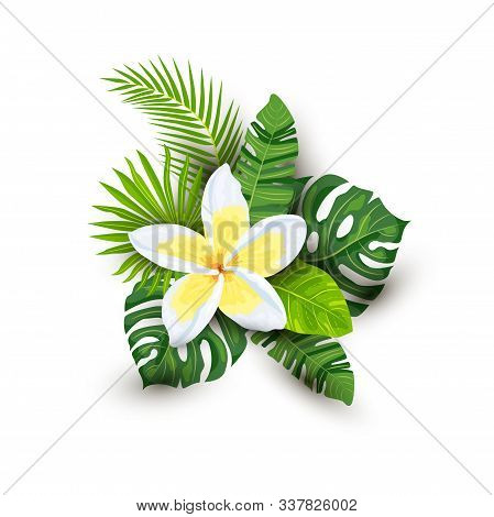Tropical Exotic Leaves And Plumeria Flower With Shadows, Vector Illustration Isolated On White Backg