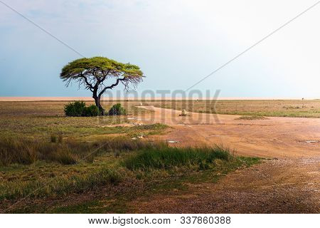 Lonely Acacia Tree And An Empty Road During Sunset In Etosha National Park, Namibia, Africa