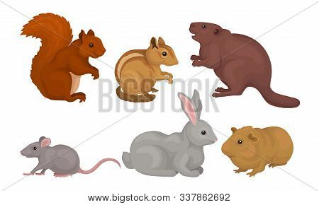Wild Rodent Animals Set, Squirrel, Mouse, Beaver, Cavy, Rabbit, Chipmunk Vector Illustration