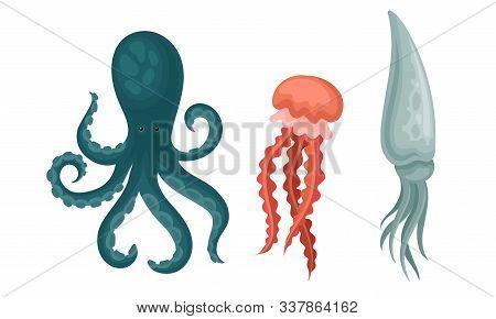 Collection Of Sea Or Ocean Creatures, Octopus, Squid, Jellyfish Aquatic Animals Vector Illustration