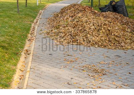 Pile Of Fallen Autumn Leaves With Filled Black Plastic Bags On Paved Road In A Park.