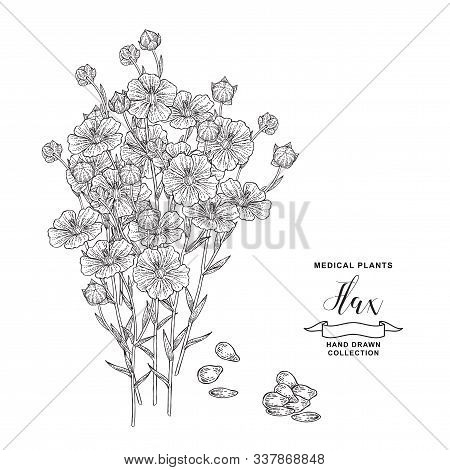 Flax Plant. Hand Drawn Flowers, Branches And Seeds Of Flax. Medical Hebs Collection. Vector Illustra