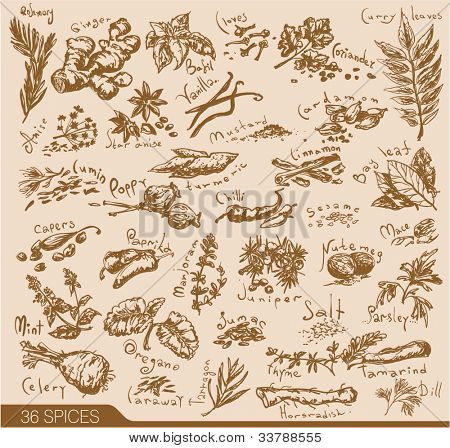Hand drawn spices and herbs collection. Vector design elements.