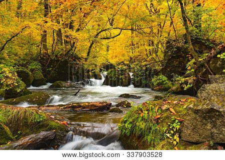 Natural View Of Autumn Color Destination At Oirase Gorge With The Oirase River Flow Passing Green Mo