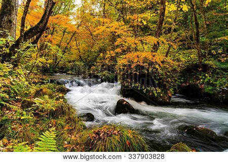 Beautiful Oirase Mountain Stream Flow Through The Forest Of Colorful Foliage In Autumn Season In Tow