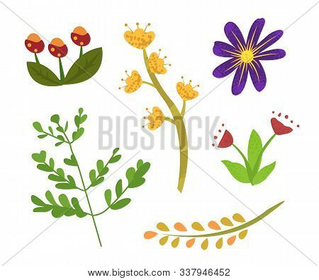 Flowers Of Summer Vector, Isolated Set Of Flora With Foliage And Small Leaves, Branch And Floral Ele