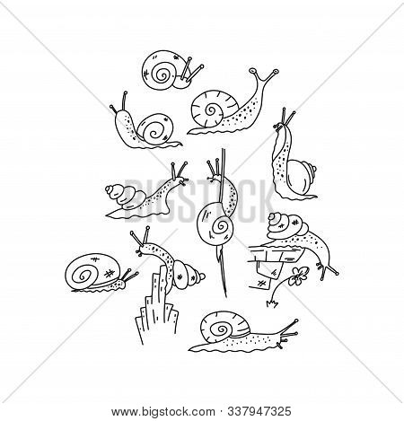 Information Flyer Sketch, Snail Inquisitiveness. Funny Little Gastropod Creatures, Mucous Body With