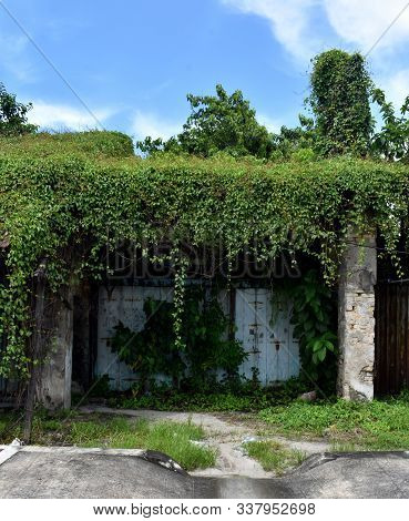 Abandoned Shopfront Overgrown With Plants And Trees