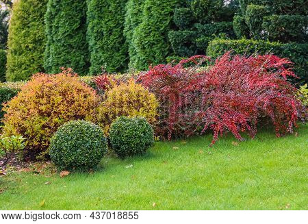 Landscaping Of A Garden With A Green Lawn, Colorful Decorative Shrubs And Shaped Yew And Boxwood, Bu