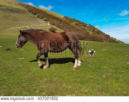 Wild Horses And Little Dog In The Green Grass Of Monte Cucco In Umbria