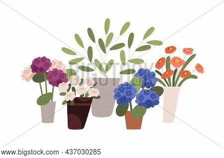Blossomed Flowers, Floral And Foliage Plants In Buckets, Vases And Pots. Modern Blooming Flora With