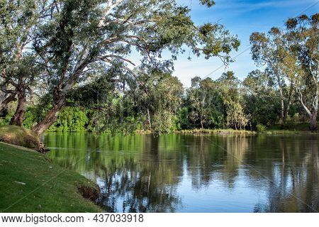 Tranquil Reflections Of Eucalyptus Gum Trees In Murray River Which Forms State Border Between Victor
